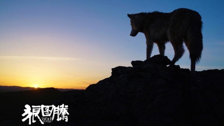 Wolftotem-sunrise-901x500