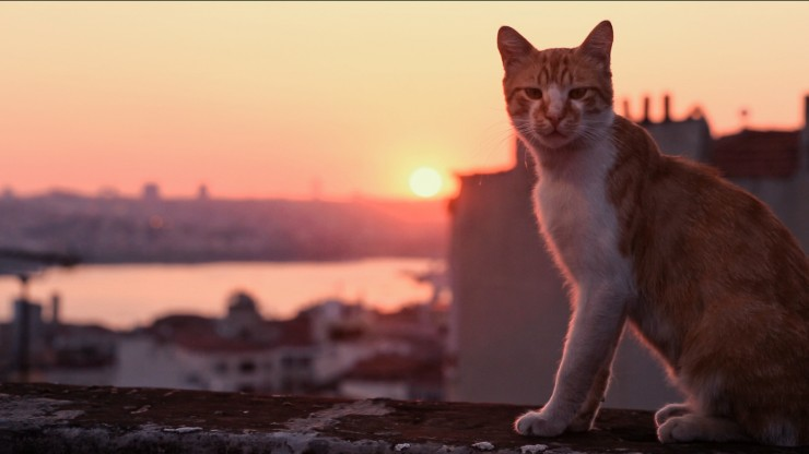 NINE LIVES - Cats In Istanbul - 8