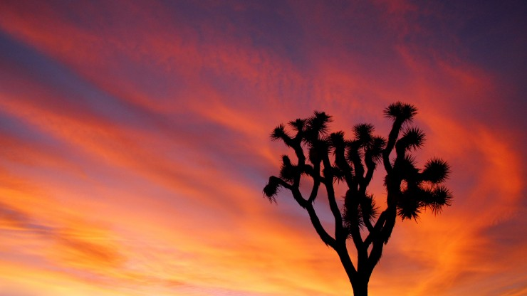joshua-tree-and-colorful-sunset_21112941630_o