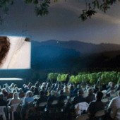 A picture of a movie screening outside in a vineyard