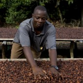 Bittersweet - the Story of Cocoa Growing in Ghana