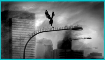 Crows Nests film still