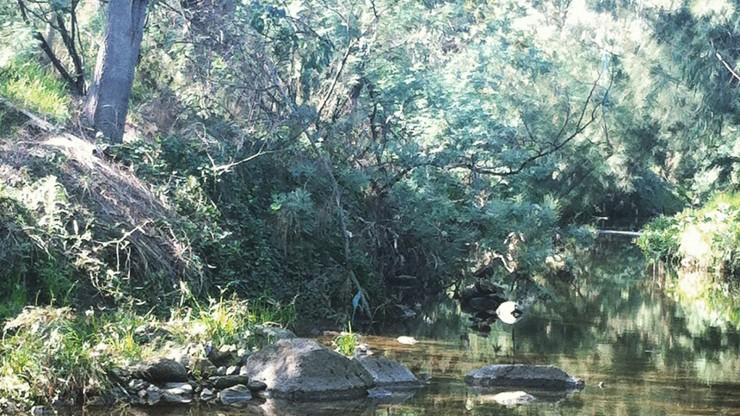darebin_creek
