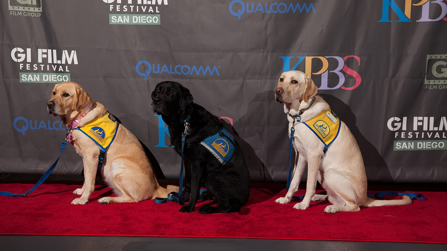 """Service dogs at the Family Movie Night featuring """"Max"""" on Friday, October 16, 2015."""
